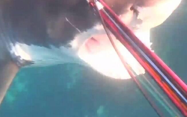 Mergulhador se defende de ataque de tubarão
