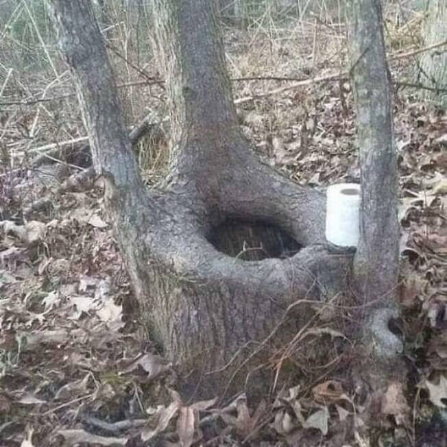 privada em tronco de árvore