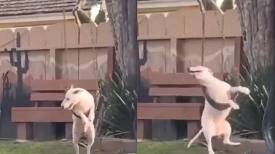 Cachorro se diverte no balanço