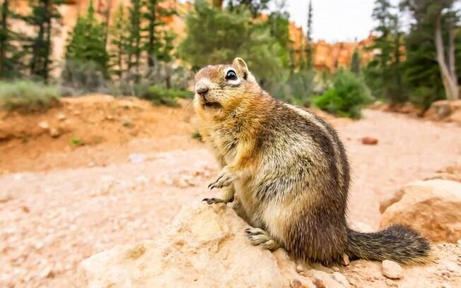 Depois da luta, o esquilo conseguiu afastar o réptil de seus filhotes.