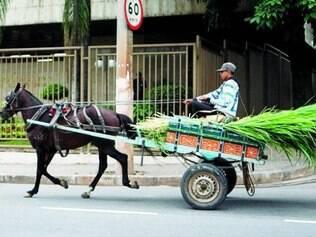 Uso de tração animal já foi questionada também em Belo Horizonte