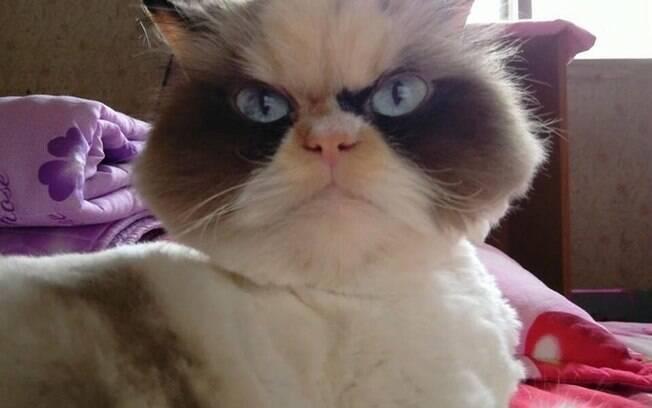Meow Meow, sucessora de Grumpy Cat