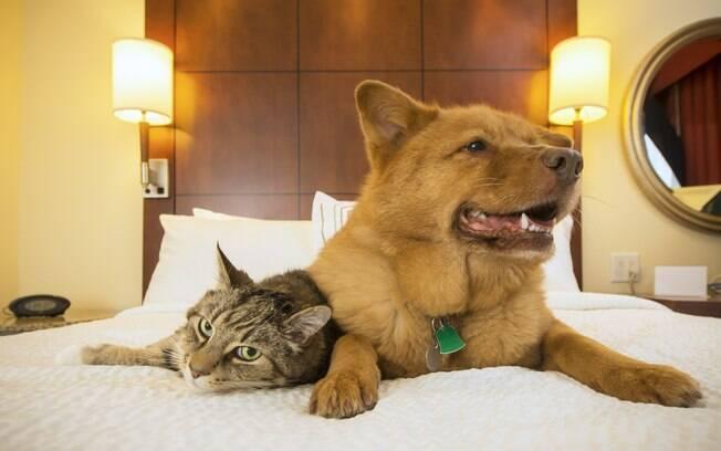 Antes de escolher entre viajar com gato e cachorro ou hospedá-lo num hotel, analise bem suas opções. Será que o destino é adequado ao bichinho? A viagem será estressante?