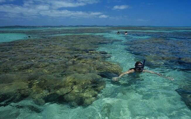 Peixinhos coloridos podem ser vistos no mergulho com cilindro nas piscinas naturais de Maragogi
