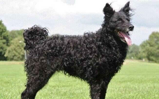 A queda de pelo em cães pode ser contida com mudanças na alimentação e na higiene