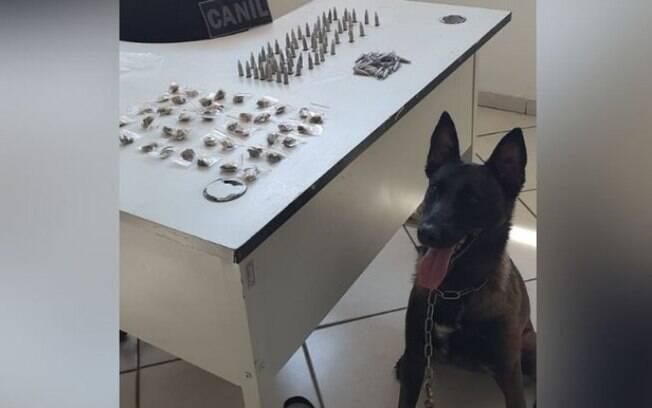 GM e cão Hera encontram 134 porções de drogas escondidas em Campinas