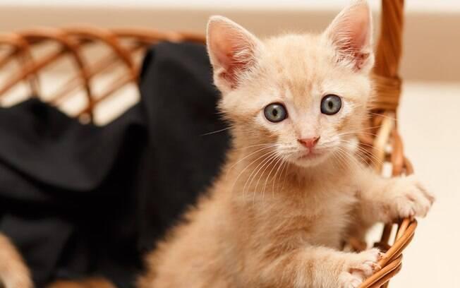 Uma mudança de casa pode ser muito traumatizante para o gato