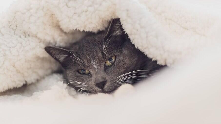 Gatos sofrem com o frio da mesma forma que os cães