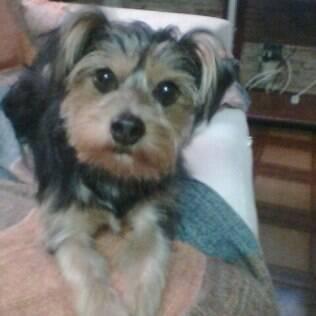 Vira-lata Giginho morreu em um pet shop poucos meses depois de ser resgatado das ruas