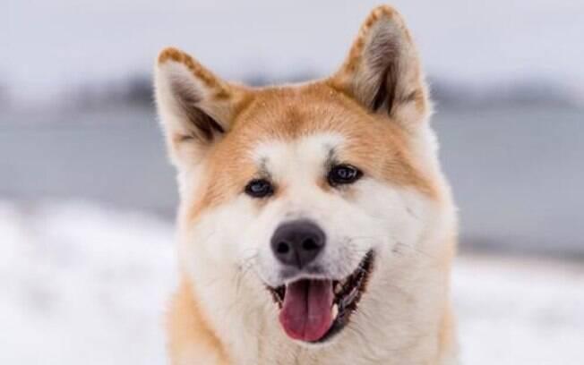 Cães com Lua em Touro (Parte I)