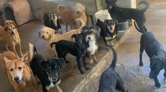 Mais de 50 cachorros estão sem lar após donos morrerem de Covid