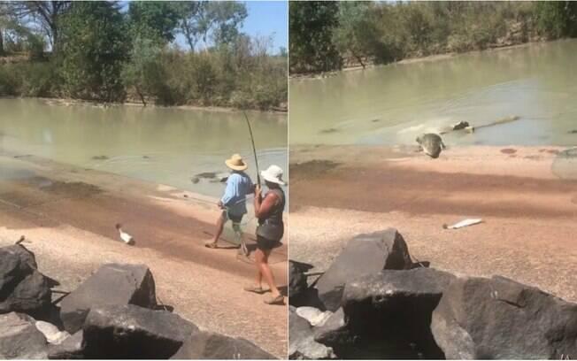 Vídeo mostra crocodilo correndo atrás de peixe pescado por dupla