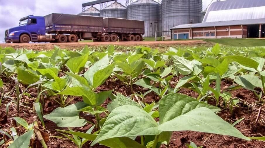 Mais de 300 agrotóxicos foram liberados pelo Ministério da Agricultura em 2021