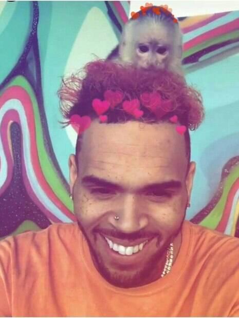 Chris Brown está sendo acusado de crime ambiental por manter macaco raro em sua casa