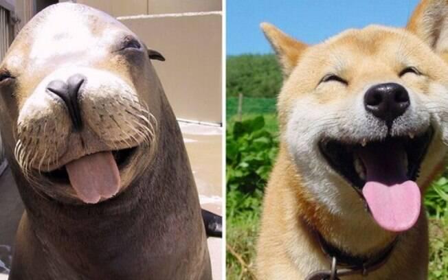 Foca e cachorro parecem estar dando risada.