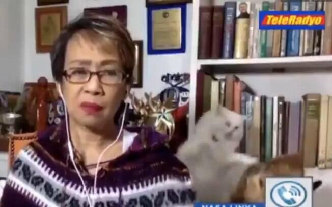 Gatos brigam durante entrevista ao vivo de jornalista