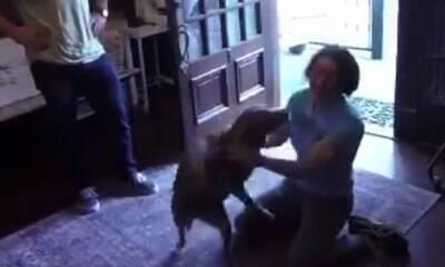 Cachorro se reencontra com a dona astronauta; veja