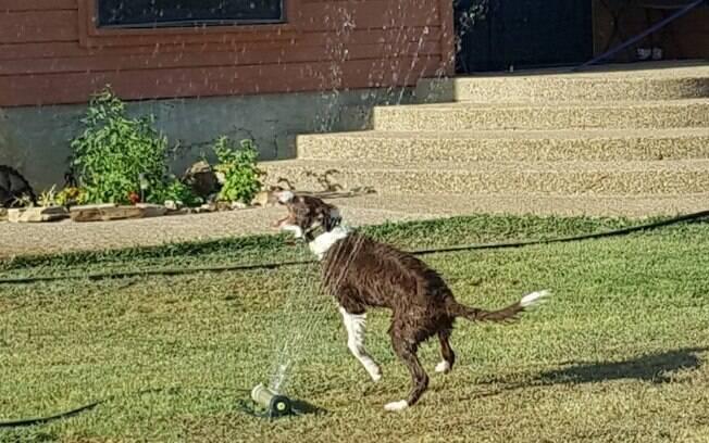 Cara contou que brincar com o aspersor de jardim é a atividade favorita do cão