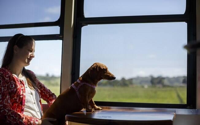 cachorro sentado no colo da dona em trem