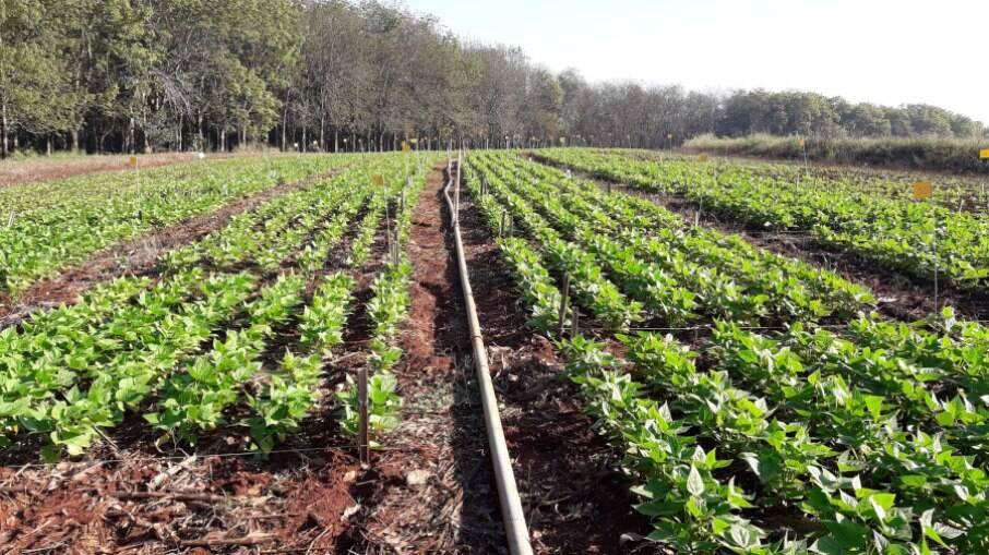 Atualmente, o país importa mais de 80% dos fertilizantes utilizados no agronegócio