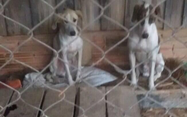 Os cães estavam desnutridos e desidratados; os animais foram recolhidos e encaminhados para o canil