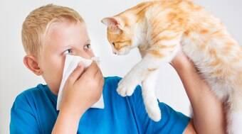 Cientistas desvendam por que os gatos causam alergia em humanos