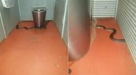 Cobra píton invade banheiro em parque e pica nádega de visitante