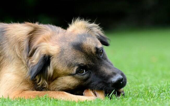 Ainda se tem pouca informação sobre as causas do lúpus em cães, o que preocupa ainda mais os proprietários. Mas, acredita-se que a doença atinge animais com predisposição genética ou através da hereditariedade