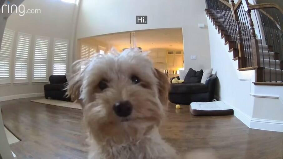 Tutor instala câmera para vigiar pet enquanto está fora de casa
