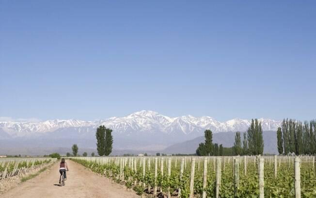Conhecer as vinícolas de bicicleta é um dos passeios mais agradáveis em Mendoza