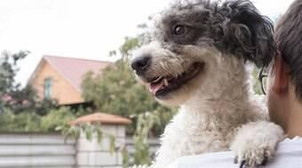 54% dos brasileiros adotaram um pet durante a pandemia