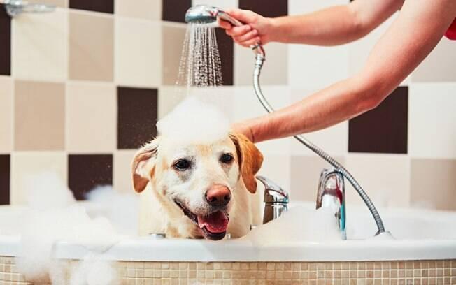 Especialista dá cinco dicas fundamentais para ajudar os donos a encontrar o melhor estabelecimento para dar banho em seus pets