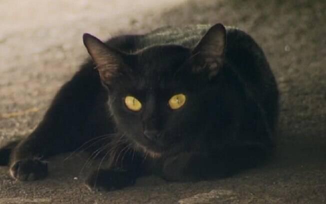 Gato em condomínio no Rio