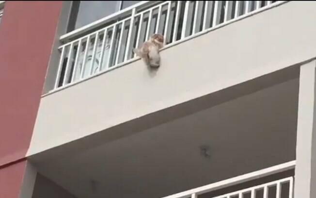 Cadela Tina pulou da sacada do terceiro andar por causa dos fogos de artifício