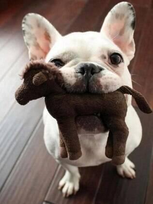 Um estudo comprovou que os cachorros preferem brincar a ajudar seus donos, comprovando uma característica egoísta