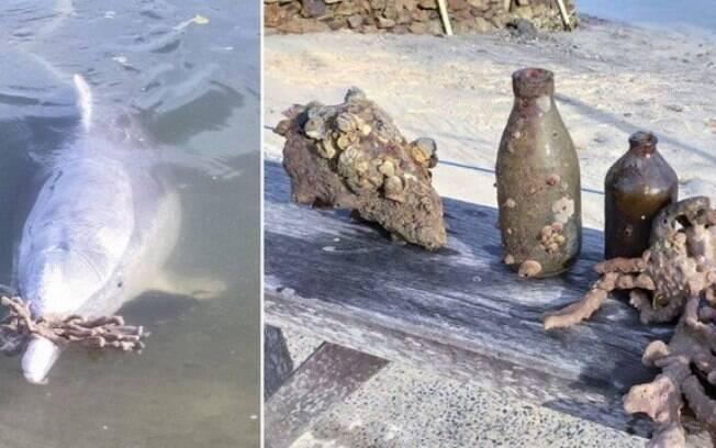 Golfinhos sentem falta de humanos na quarentena e deixam