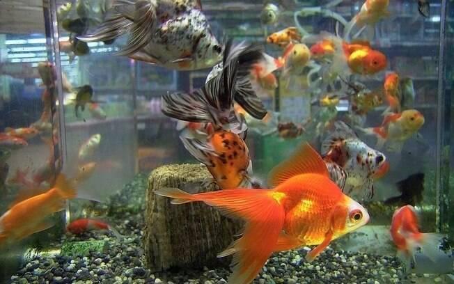 Casal obrigou menina a comer 30 peixes dourados para dar uma lição na filha
