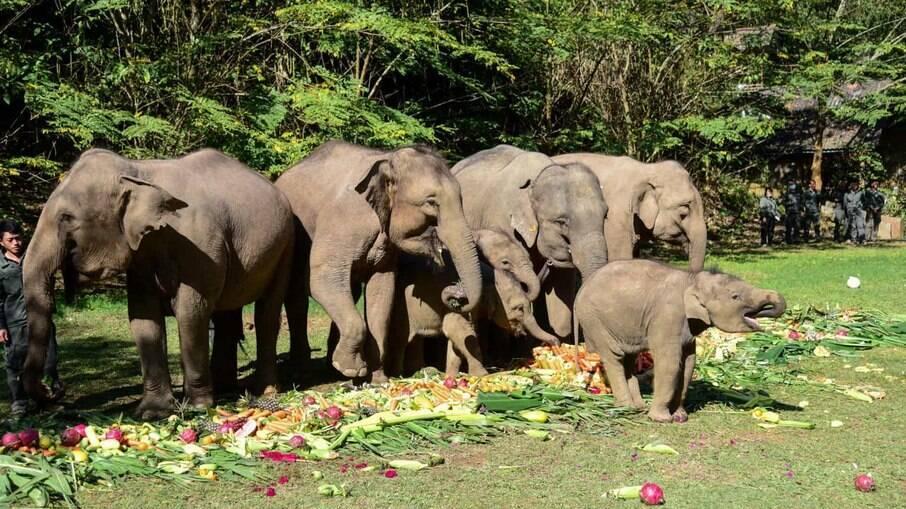 Elefantes fugiram de reserva natural no sul do país