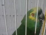 """Papagaio canta """"The Monster"""" e pessoas amam"""