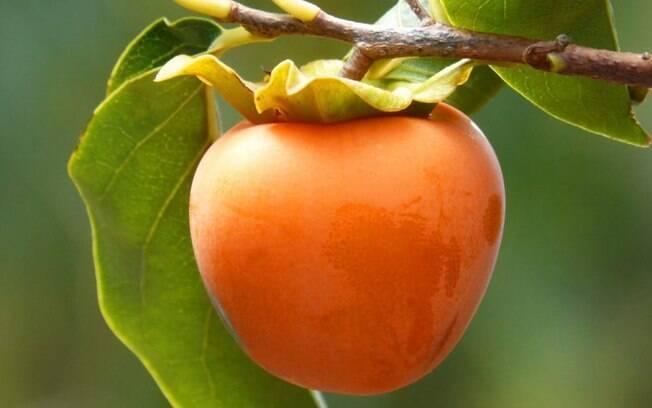 Frutas de junho: conheça quais são e seus benefícios