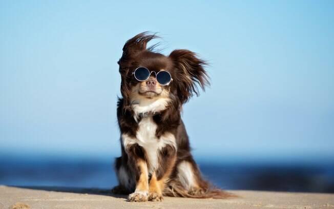 É muito fácil e barato fazer o seu cachorro feliz