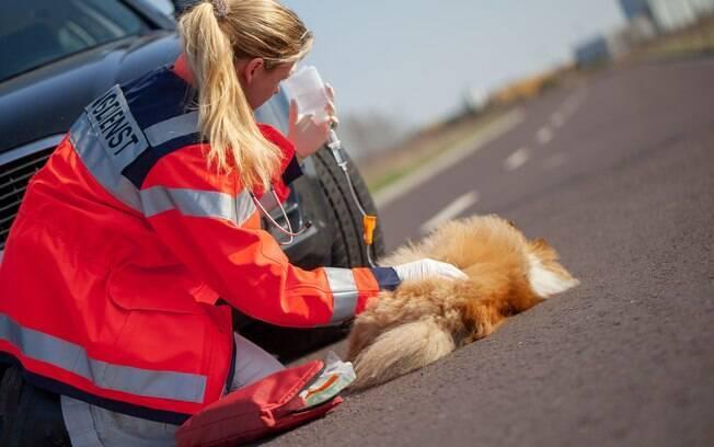 As principais causas do politraumatismo canino são atropelamentos, espancamento, acidentes de carro, quedas de locais altos e até brigas com outros animais