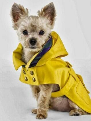 Existem vários modelos e estilos de roupas para cachorro