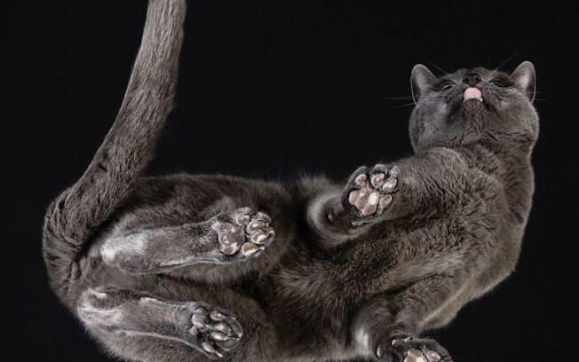Gatos e cachorros fotografados em superfícies de vidro