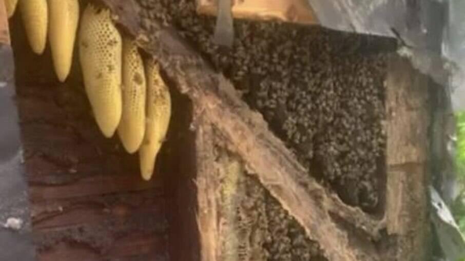 450 mil abelhas dentro de casa no estado da Pensilvânia, nos Estados Unidos