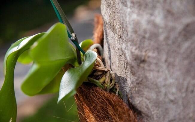 Tome cuidado para não sufocar a planta com o suporte. Lembre-se de deixar a borda com um espaço maior do que o fundo . Foto: Edu Cesar/Fotoarena