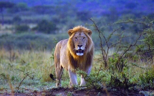Homem foi perseguido e morto por leões