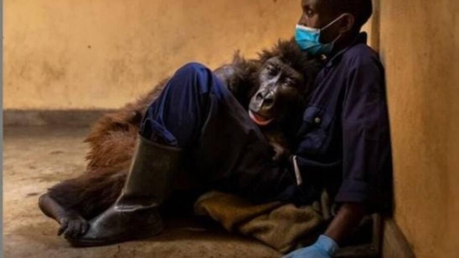 Gorila Ndakasi