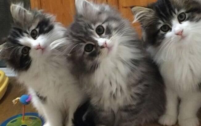 Existem muitas curiosidades sobre gatos