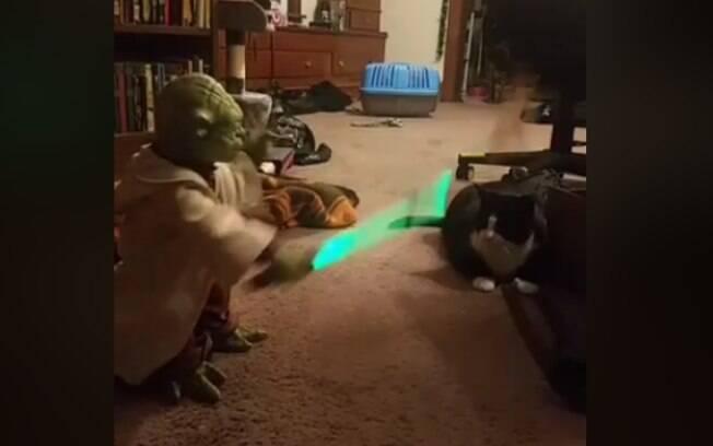 Yoda duelando com gato